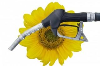 Получение биотоплива в домашних условиях