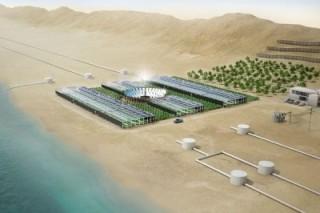 Ветровая энергия Кореи: В Донг Янге построят новую ветровую ферму