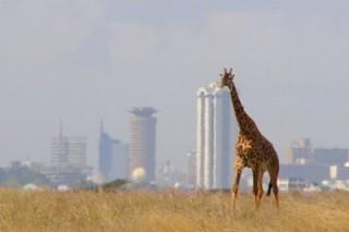 Кенийцы используют телефоны с солнечными батареями