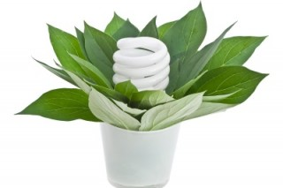 Энергосберегающие лампы и лампы накаливания для освещения