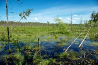 Интересные экологические факты о жизни на Земле. Часть 2