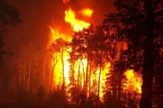 Почему горят сибирские леса?