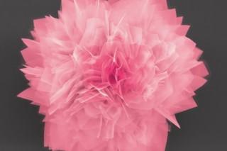Нано-цветы могут привести к прорыву в хранении энергии и солнечных батареях