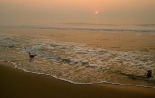 Следы закисления океана экологам помогли найти раковины так называемых морских чертей