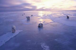 Несмотря на глобальное потепление, льды Антарктиды растут