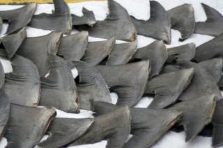 Новое требование на запрет промысла плавников акул готовится ввести Евросоюз