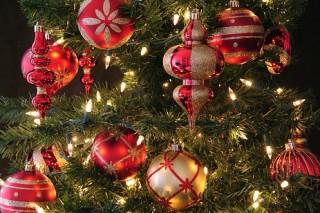 Ученые обнаружили, что в каждой новогодней елке живет более 20 тыс. мелких насекомых