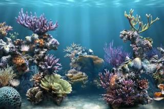 Кораллы к концу этого века будут истреблены