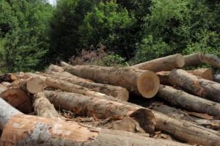 На территории курортной зоны в вырубке леса признали виновной группу горожан