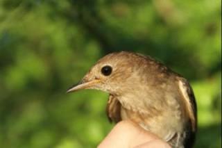 В районе Африканского Рога на мигрирующих птицах негативно сказывается засуха