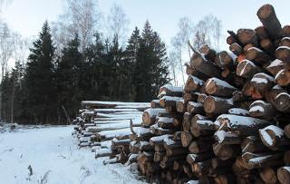 Вырубку леса в Химках суд признал незаконной
