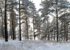 В Иркутской области семидесяти территориям будет присвоен статус особо охраняемых
