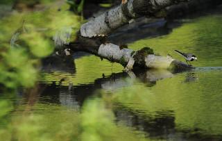 В две тысячи четырнадцатом году Васюганское болото в Томской области станет заповедником федерального уровня