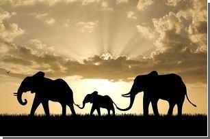 Приблизительно сто девяносто слонов погибло в самом крупном национальном парке в Зимбабве