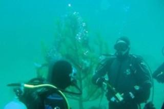 В Боснии и Герцеговине спасатели и водолазы нарядили под водой елку