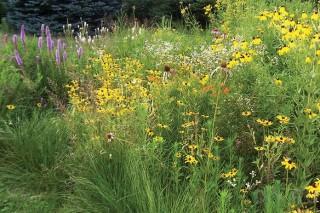 Риск пожаров увеличивают инвазивные виды трав