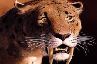 Оказалось что вымирание саблезубых кошек никак не связано с голоданием