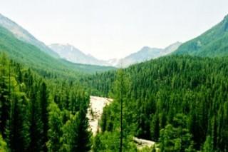 Новый закон сможет защитить заказники и природные парки Горного Алтая
