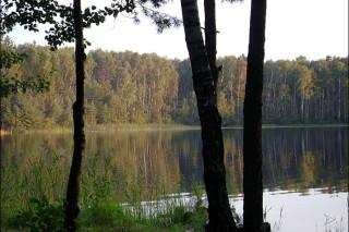 Гринпис предлагает спасти леса на побережье рек