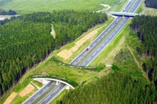 В России под Переславлем появится первый мост для животных