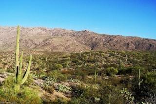 В американской пустыне число мусора превысило число животных