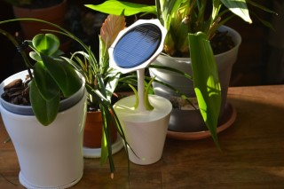 Смартфон заряжает Solar Sunflower — «подсолнух»