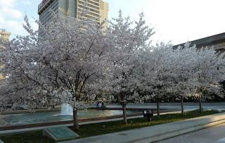 Весна в США наступила раньше срока на полтора месяца