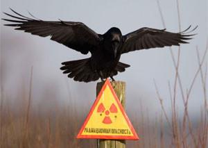 В России создадут национальный радиационно-эпидемиологический регистр