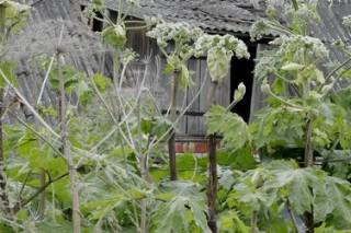 Местным видам растений угрожают инвазивные разновидности растений