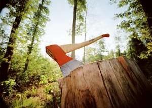 Властями Архангельской области запрещено вырубать деревья возле родников
