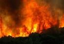 В центральной части Чили вот уже который день бушуют лесные пожары