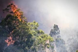 Бушующие в Австралии пожары подступают к Сиднею