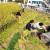 Зеленые удивительные крыши Китая