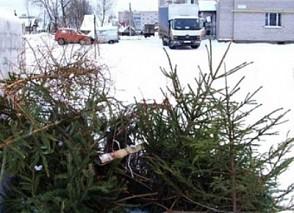 Впервые в Липецке перерабатывают в удобрения новогодние елки