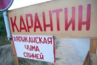В Ярославской области обнаружили вирус африканской чумы свиней