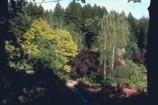От смешанных лесов пользы больше, чем от леса с одним видом деревьев