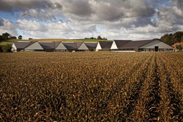 Молочная ферма в Дании