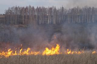 Гринпис хочет запретить поджог сухой травы