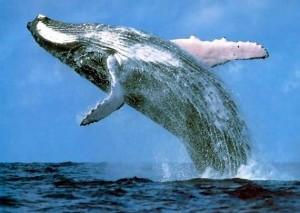 Всемирный день китов вчера отмечали экологи