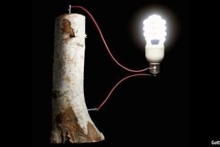 Стабильность возобновляемой энергии может повысить деревянный аккумулятор