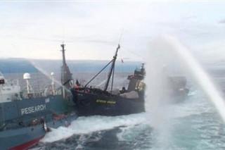 В Антарктике защитники китов столкнулись с японскими китобоями