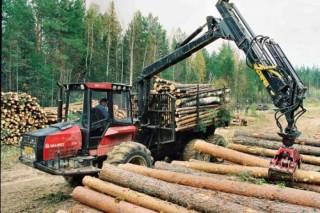Для ликвидации дефицита семян в Костромской области создаются лесные питомники