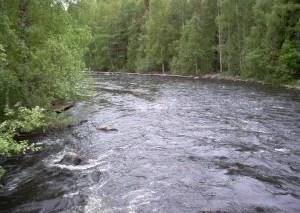 Систему мониторинга рек запускает Росгидромет в Краснодарском крае