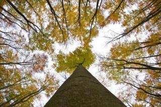 Рубка деревьев на Дальнем Востоке в 2-4 раза превышает разрешенные объемы