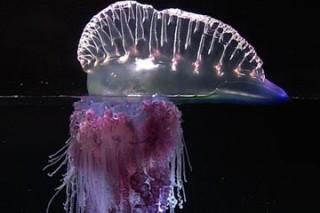 В Таиланде появились ядовитые медузы