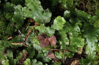 В Катунском заповеднике ученые обнаружили неизвестный науке вид мхов