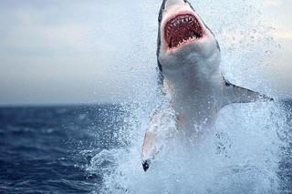 В прошлом году в США зафиксировали рекордное количество нападений акул