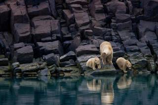 Арктика безо льда