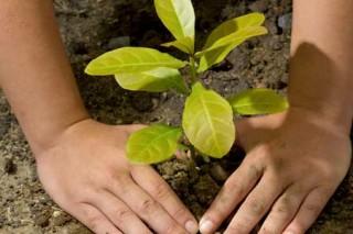 О защите этического обращения с растениями