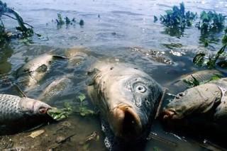 Экологи из Липецка борются с замором рыбы в реках и озерах